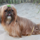 Dog of The Day for 3/16/2013 — Sonny — 5 years old