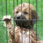 Have you Adopted or Rescued a Shih Tzu?  If you have I'd like to Interview you for our website