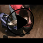 Dog Strollers for small dogs — Review