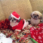 Merry Christmas from Bella and Tiffany