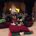 Happy Holidays .. Beau, Bam Bam, BlackJack & Bling Nicoll