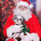 Shih Tzu Photos from Christmas Contest — Sherry