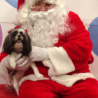 Shih Tzu Photos from Christmas Contest — Bill & Robin Vosd