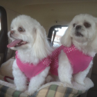 Dog of The Day for   ~12/23/2013~ Emmy and Gracie sisters 5 years old