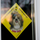 Free Save my Shih Tzus Sign (In Case of Emergency Please save my Shih Tzus)