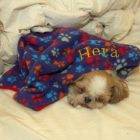 Blanket Special for PawDogs Week of 5/19/2014