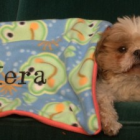 Thumbnail image for Blanket on Sale for Hera's Birthday – Save $4 with this Coupon