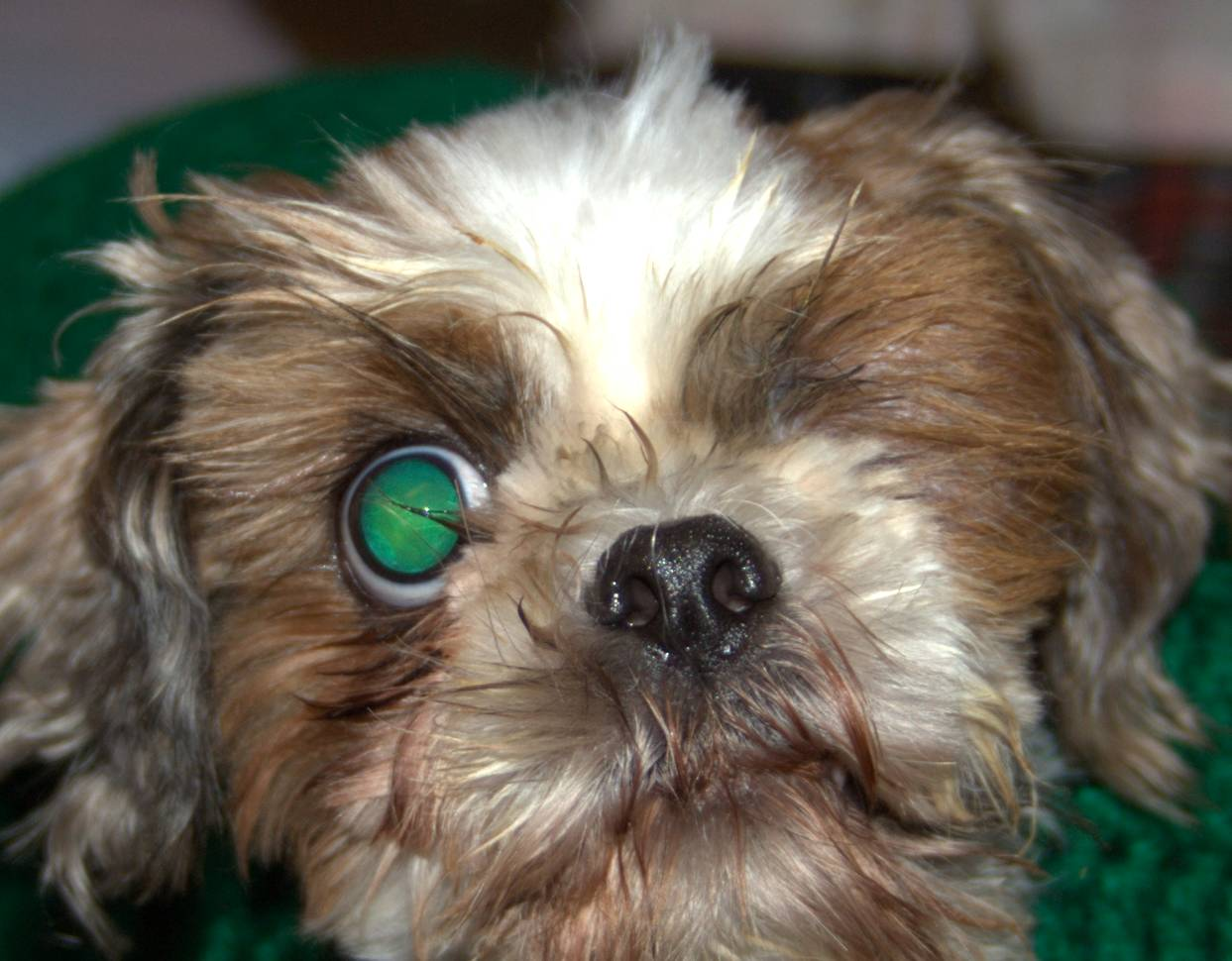 Dogs That Are Blind In One Eye