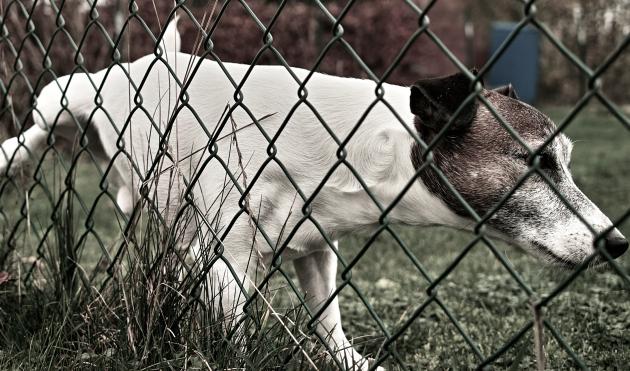 dog-marking